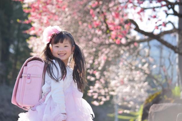 桜の下でピンクのランドセルを背負った一年生