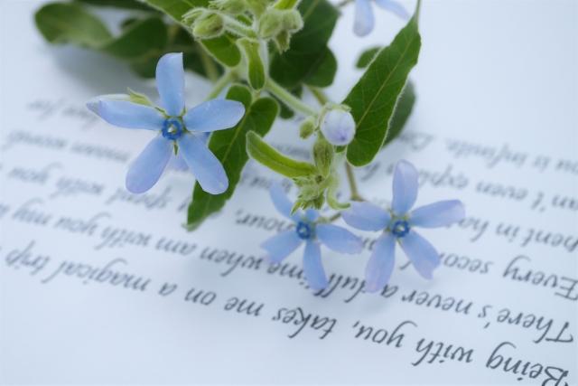 手紙とデイジー